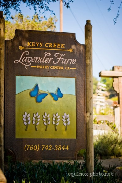 Love Keys Creek Lavender Farm This is where I lead my Mindful Retreats..it's gorgeous!