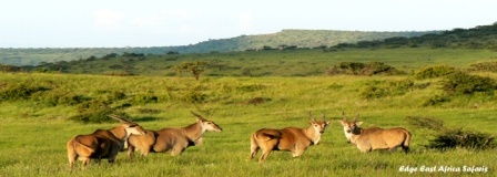 Serengeti is a very popular place in Africa known for wildlife travel. It has endless grass plains. In Serengeti there are wide range of accommodation options available from budget inns, hotels to lodges. Serengeti provides an amazing view of wildlife animals, flora and fauna. Contact on 254 727478845 to choose most affordable East African wildlife safaris package.