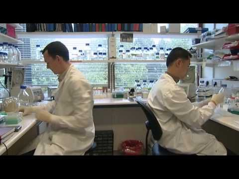 Five short videos and a feature documentary about different aspects of stem cell science, ethics, cell culture and cloning.