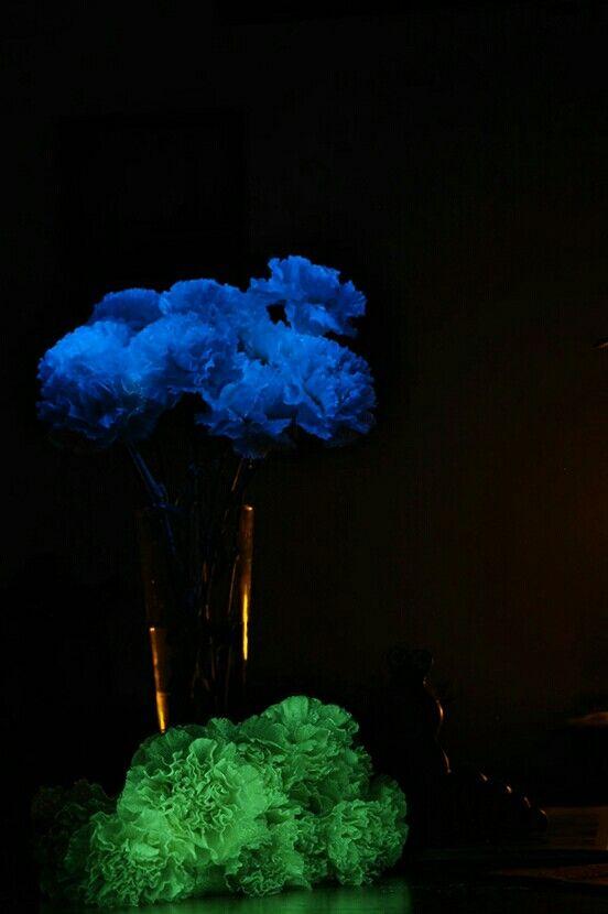flAVATAR carnations glow in the dark