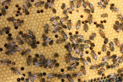 What to Do Right Now if You Want to Keep Bees This Year | Urban Gardeners Republic - #Newpost - In a few short weeks it will be time for your bees to arrive and for you to hive them! Be ready!