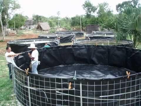 tanques de geomembrana de polietileno TANGEOMEX PARA TILAPIA