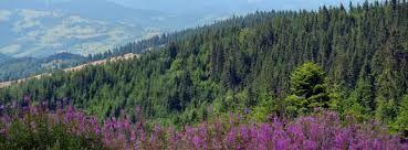 «muntii apuseni»  Transsylvania Phoenix - Negru Voda