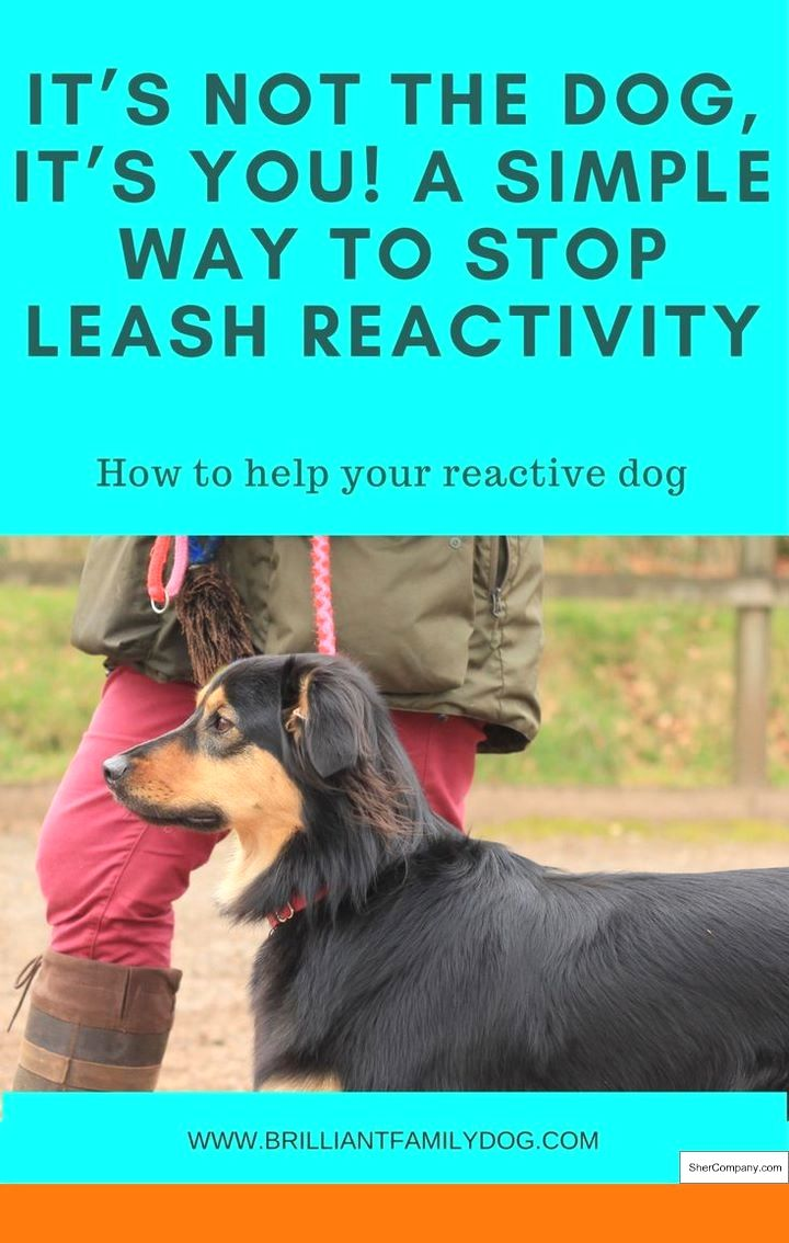 Dog Training Tips Cesar And How To Train Your Dog Not To Bark At