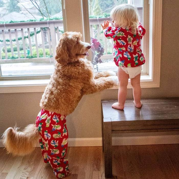 Compartiendo im Glad the PJ Bottoms Aint Too Small aka Correct Size For The Dog! This Pic Is Priceless... i quess being at home, if baby aint going to wear Bottoms & Dog Aint Gonna Mind Wearing Bottoms...