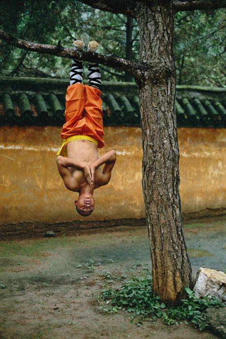 in tree...meditacion...
