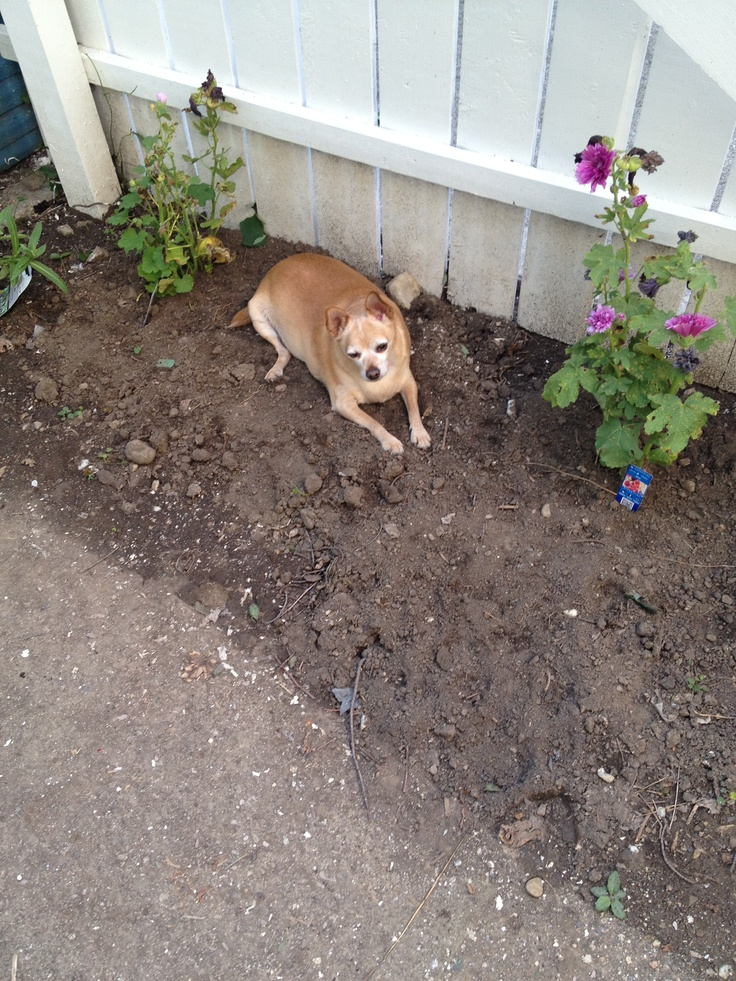 Georgie in the dirt