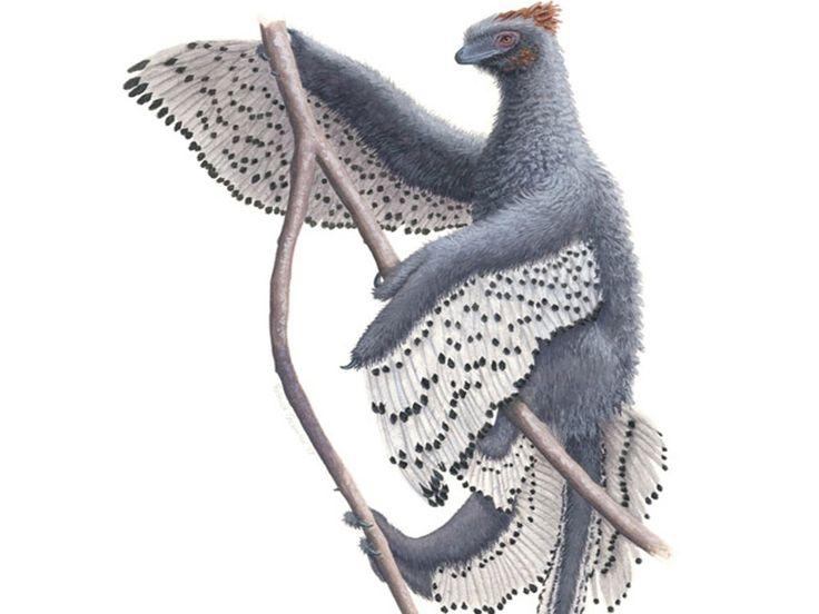 Un estudio revela en detalle cómo eran los dinosaurios emplumados
