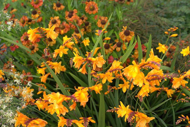 Coen Jansen Vaste Planten - Kweekt speciale planten met een natuurlijke uitstraling die zó uit de natuur gehaald lijken te zijn. Onderdeel van het Inspirerend Groen arrangement van Mooirivier, maar natuurlijk ook gewoon te bezoeken.