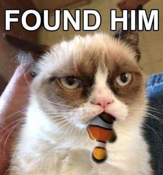 Grumpy Cat finds Nemo…