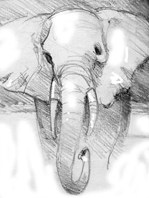Elephant Nature Sketches