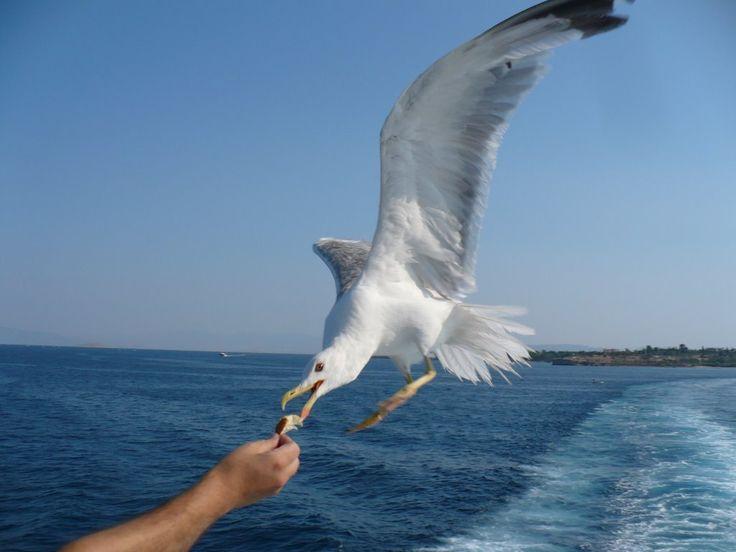 We ❤ Greece | Feeding a seagull. #Greece #travel #explore #destination