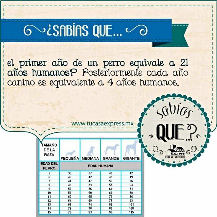 ★★★★★ Encuentra Curiosidades Coches, Notas Curiosas De Geografia y Noticias Curiosas Raras Y Divertidas  → → → http://www.cienic.com/el-bilinguismo-previene-la-demencia/