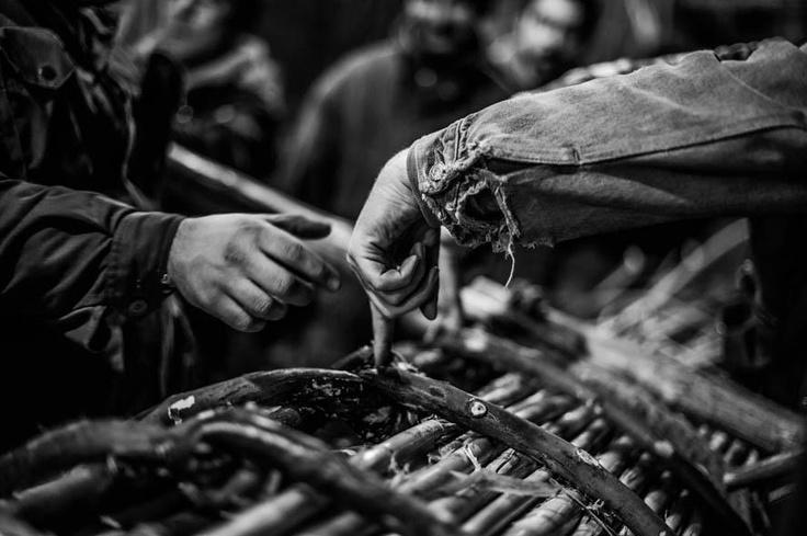 Le canne che costituiscono la farchia vengono tenute insieme da rami di salice (Foto Mario Sabatini)