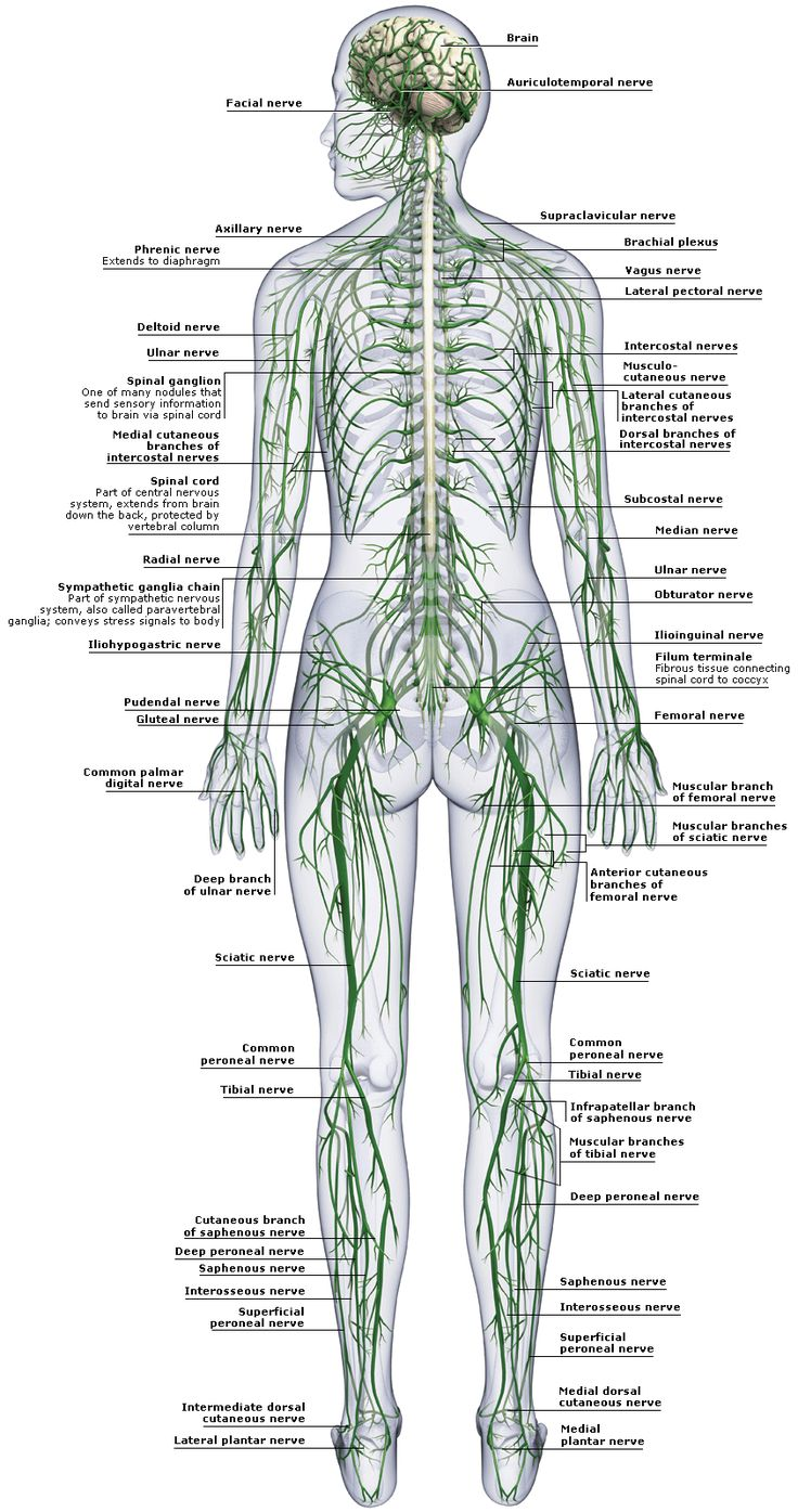 23 best Arriving Mindfully images on Pinterest | Human anatomy ...