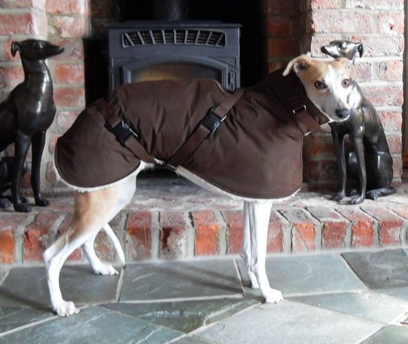 I Heart Whippets Facebook 7 best ideas about Whi...