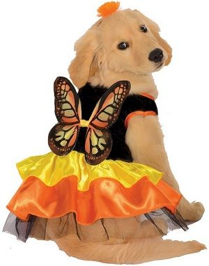 Butterfly Dog Halloween Costume