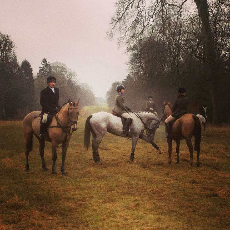 Horses on Boxing Day Hunt