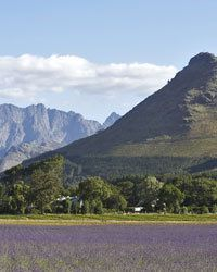 South Africa's Beautiful Wine Country   Food