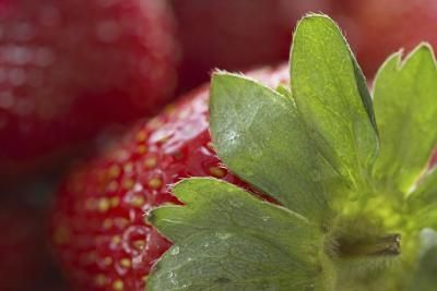 What Are the Health Benefits of Strawberry Leaves? | LIVESTRONG.COM