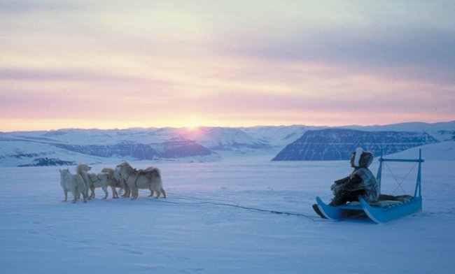 Dogsledding in Greenland