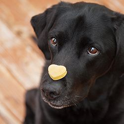 pumpkin peanut butter dog treats!