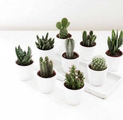 How To Take Care Of Succulents And Cactus
