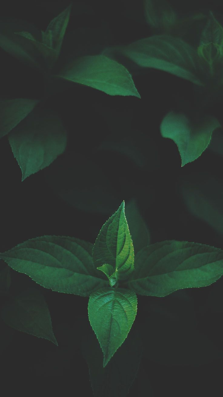 12 Botanical Iphone Xs Max Wallpapers Preppy Wallpapers Dark Wallpaper Leaf Background Botanical