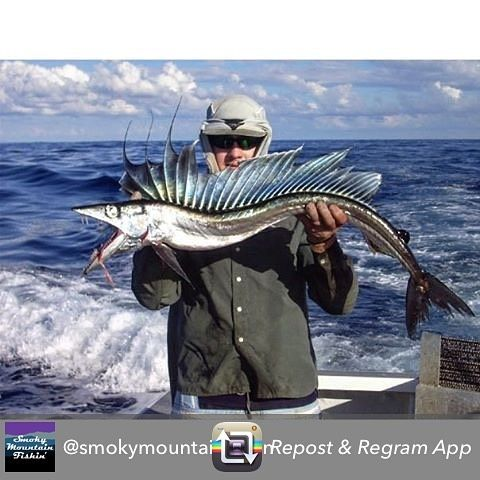 @smokymountainfishin with this cool picture of a lancet fish! Thing looks like a true big ass monster! lets see your best comments #deepsea #deepseafishing #lancet #lancetfish #monster #monsterfish #bigfish #biggame #bigassfish #fish #fishing #fishlife #fishingphoto #angler #anglerapproved #amazing #tuesday #killedit #inshore #instalike #instadaily #instafollow #inshorefishing #offshore #offshorelife #offshorefishing #picoftheday #photooftheday by monsterfishingpics