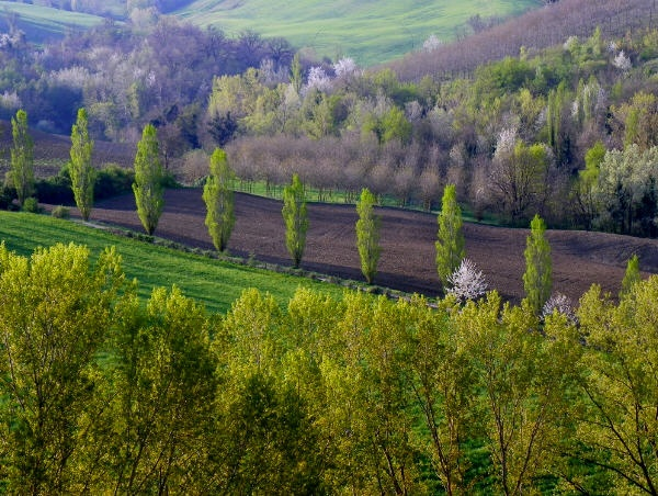 Pictures Tenuta Gorgiano | Poplars spring