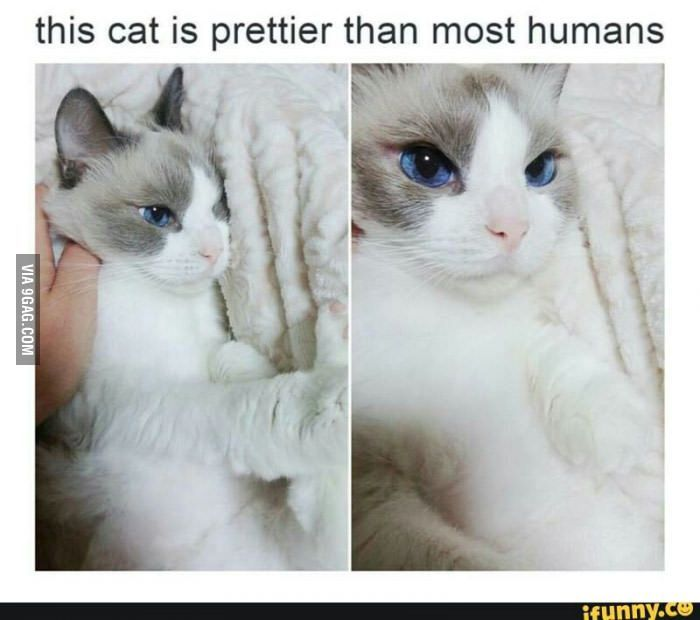 This cat looks better than every single makeup-covered girl at my school....