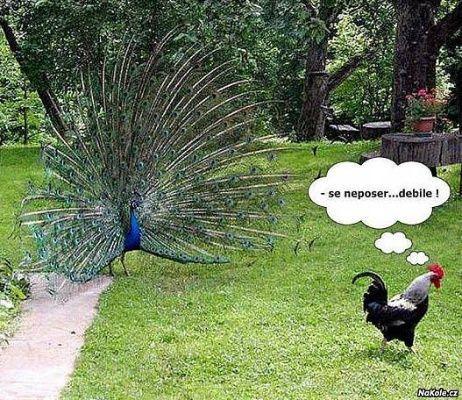 závist | Mimibazar.cz
