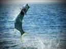 fishing offshore!