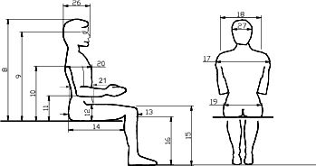 Anthropometrics The Measurement Of The Size Proportions