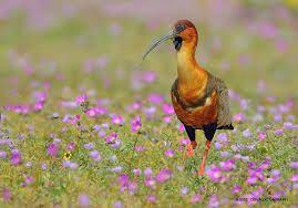 Resultado de imagen para paisajes del norte de chile desierto florido