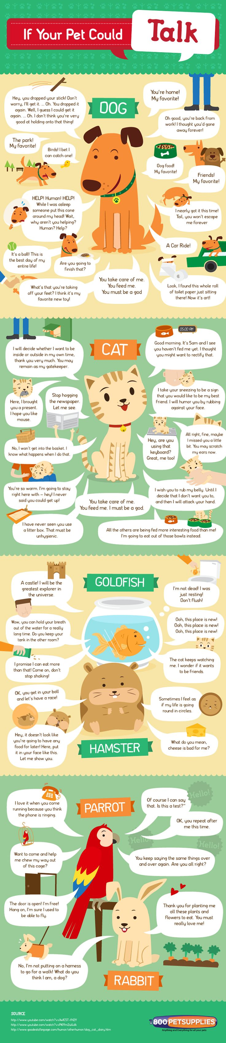 If Your Pet Could Talk (Infographic) #cats #cat info graphics