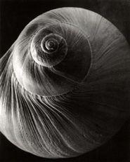 Edward Steichen - Spiral Shell, 1921