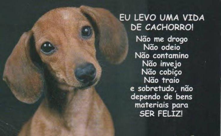 SEMPRE APRENDENDO COM NOSSOS ANJINHOS. ❤️ #cachorro  #maedepet  #maedecachorro  #filhode4patas  #cachorroterapia  #cachorroétudodebom  #caopanheiro  #amocachorro