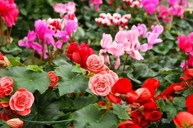 Plantas de interior que florecen todo el a o limpieza for Plantas de todo el ano