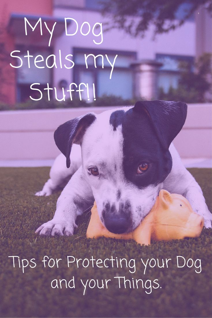 2811 best stop dog chewing images on pinterest | dog chews, dog