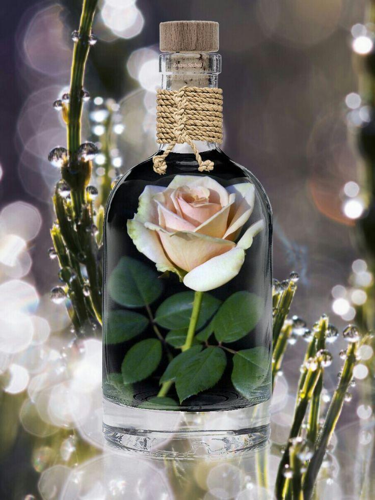 Rózsa üvegben.