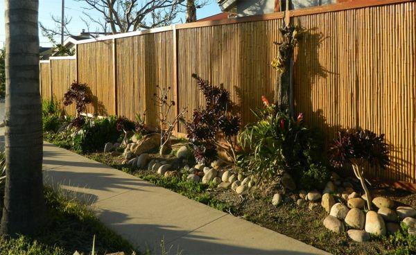 canisse bambou et un jardin ensoleillé