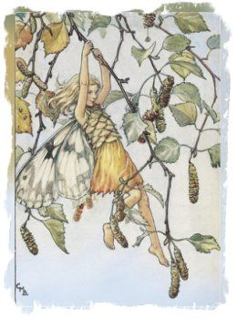 ARTICLE: The Magic of the Ogham Trees. Birch. Eco Enchantments. Birch Fairy by Cicely Mary Barker