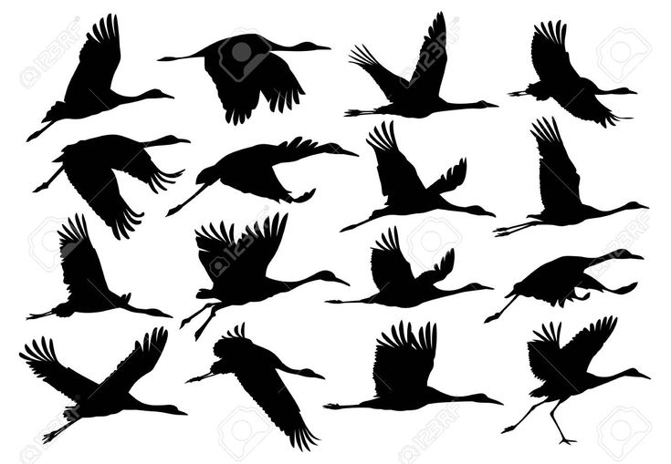 A set of silhouettes of the flying cranes affiliate