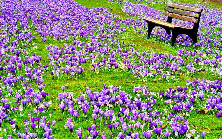 Springing Into Spring | Her Campus