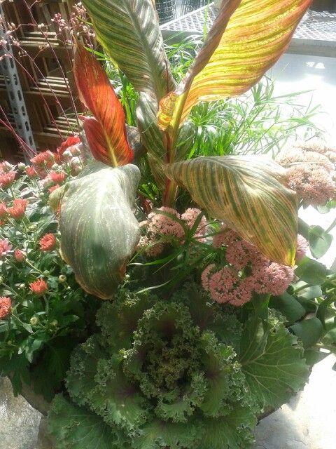 garden flowers - primrose