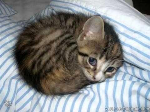 More Cute Kittens - Cute Kitties Best TOP 10 Video Compilation 2015 NEW https://www.youtube.com/watch?v=g3YQL141cU8&list=PLC_HjotBFMpMqtWdreL586P0b7cbxN_Of