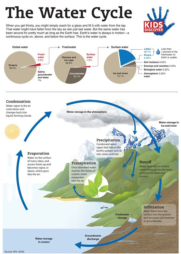 The Water Cycle, explained in an easy-to-follow infographic. Click thru for FREE PDF download, great for a quick lesson at home or in the classroom!
