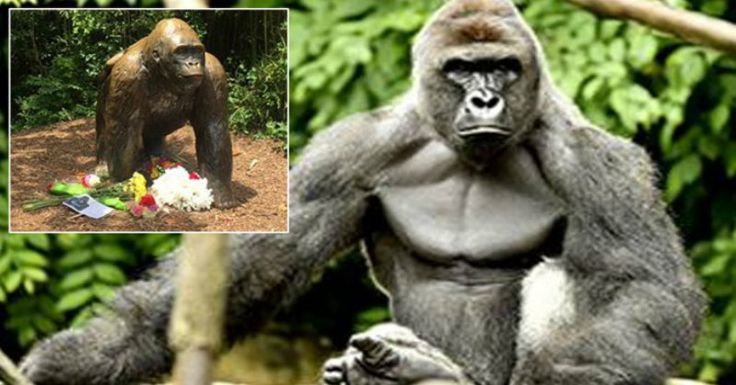 While You Were Mad About A Dead Gorilla, Look Who Was Killed & Ignored