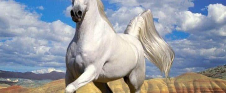 تفسير رؤية الحصان الأبيض والأسود فى المنام Horses Animals Color